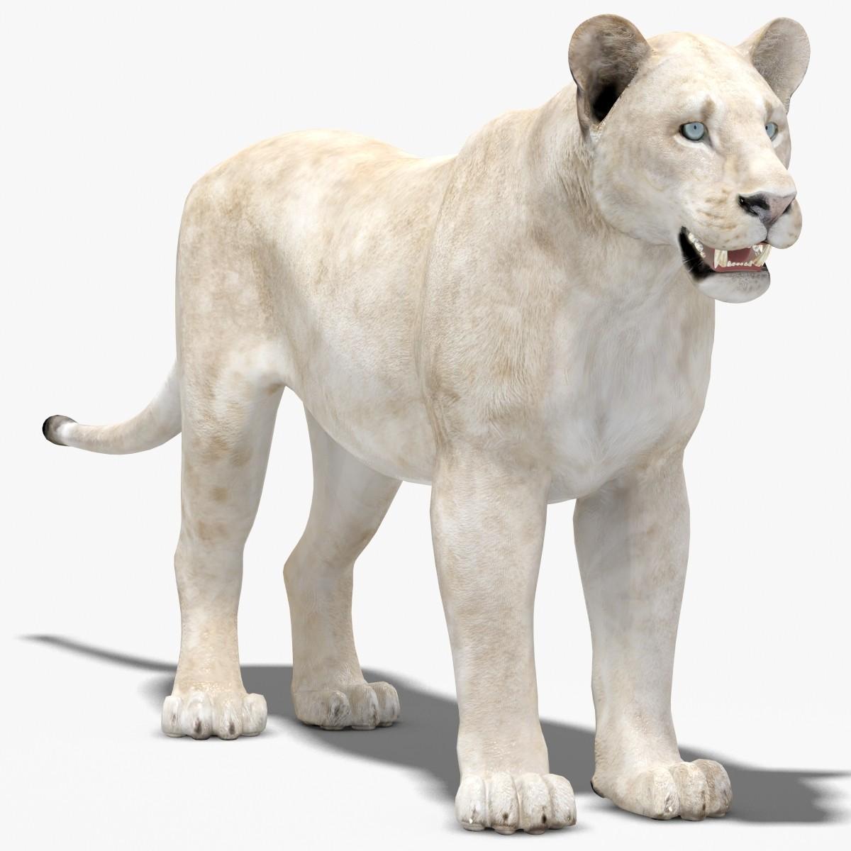 Lioness-01.jpg