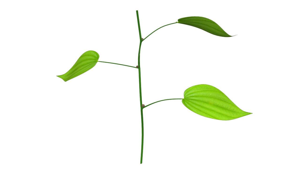 dioscorea plants obj