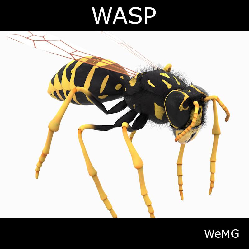00_WASP_.jpg