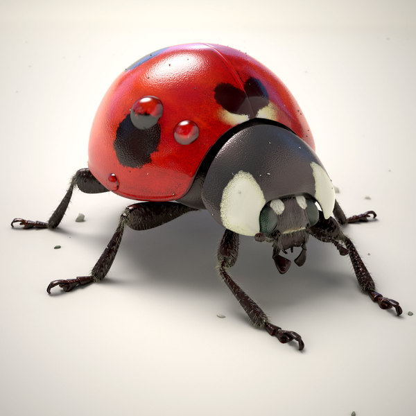 Ladybug (Animated) (V-Ray Fur) 3D Models