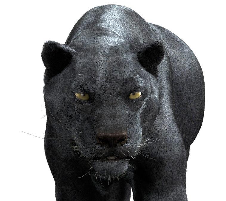 panther05.jpg