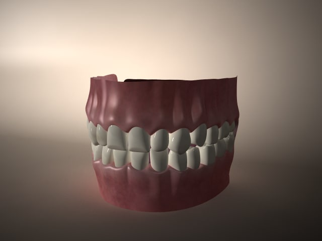 Dentition with gums and tongue