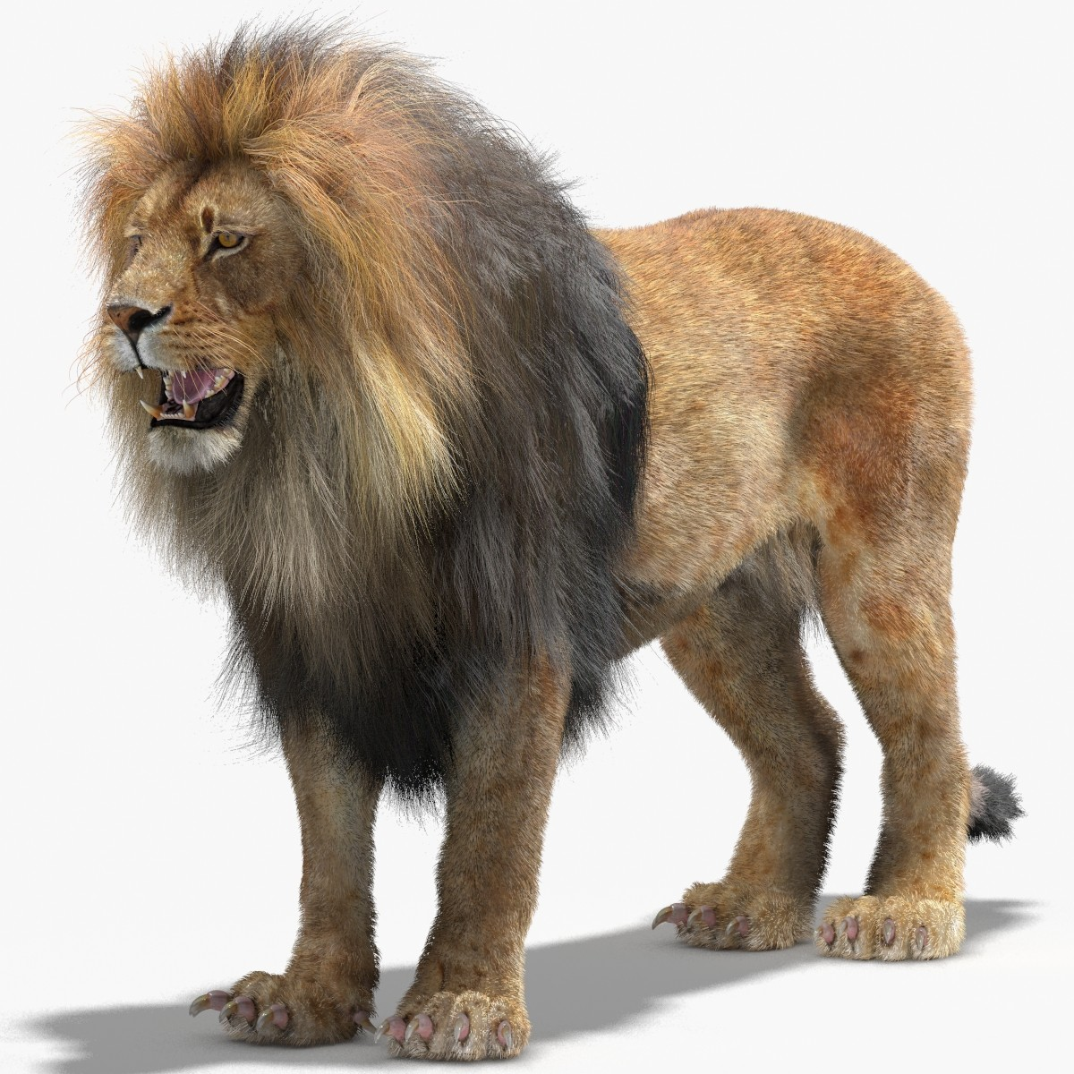 Lion-3d-Model-Fur-Mental-Ray-01.jpg