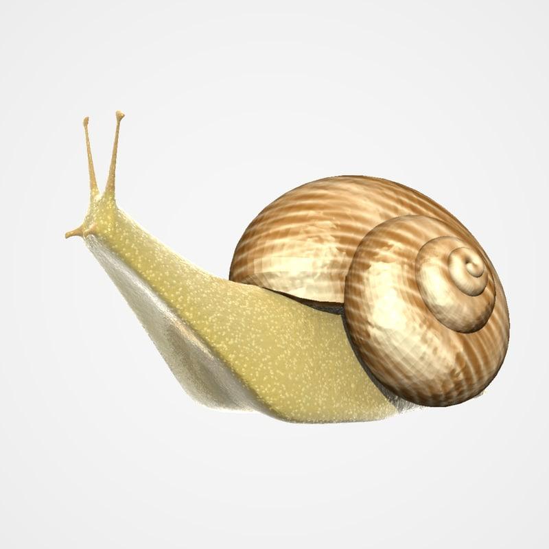 snail pomatia mollusca 3ds