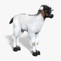 Kid Goat 3D models