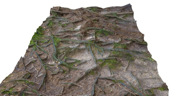 Forest Roots HD 8K Texture Maps