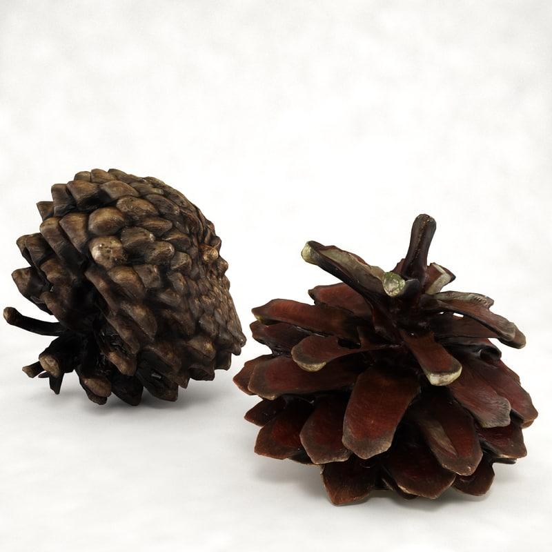 Pine cone open+closed