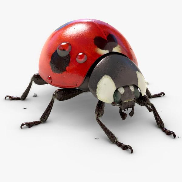 Ladybug (Animated) (V-Ray Fur) 3D Models