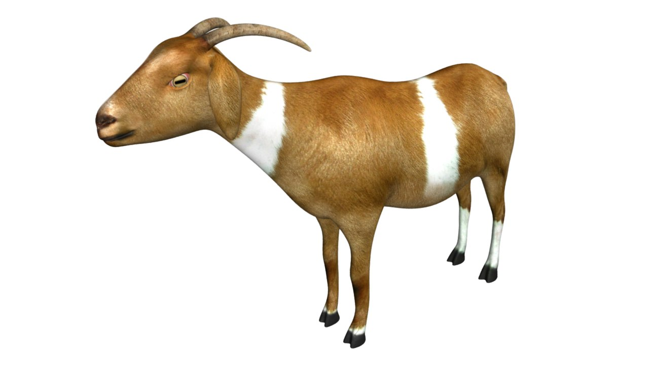 Goat_02.png