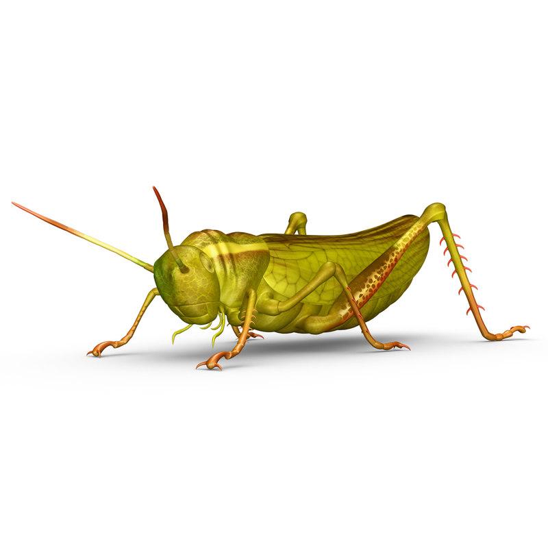 1554.Grasshopper.jpg