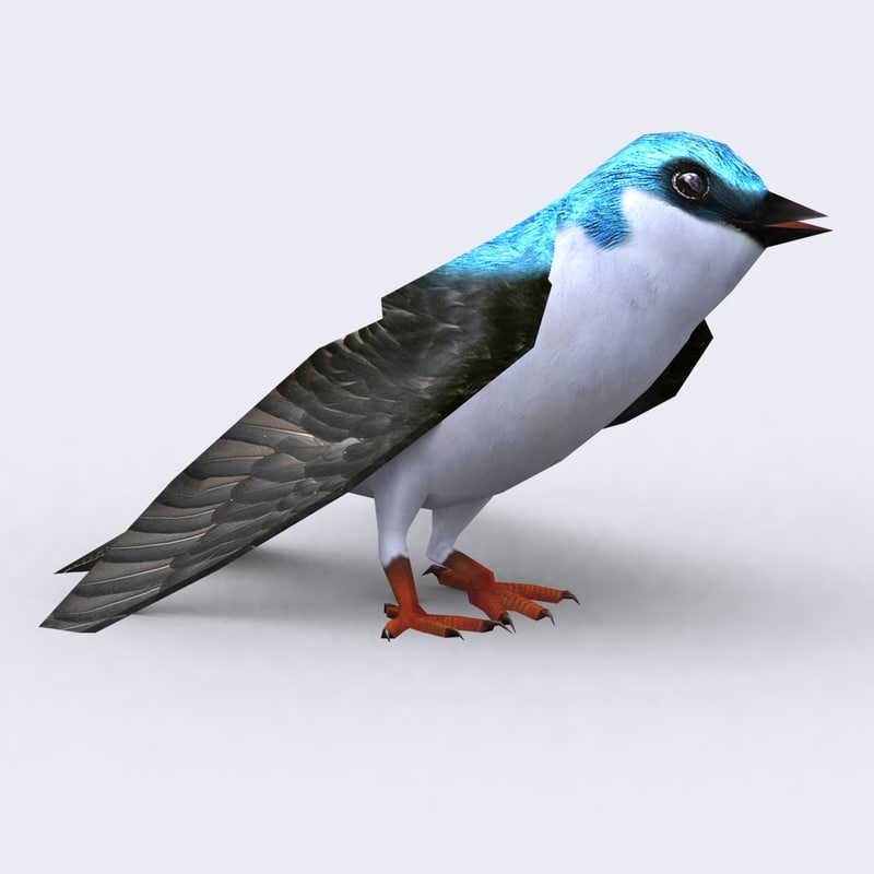 birds-critters-animals-3d-models-animated-pack-eagle-duck-bat-sparrow-heron-stork-swallow-seagul-baterfly-snake-spider-cockroach-mouse-rat_16.jpg