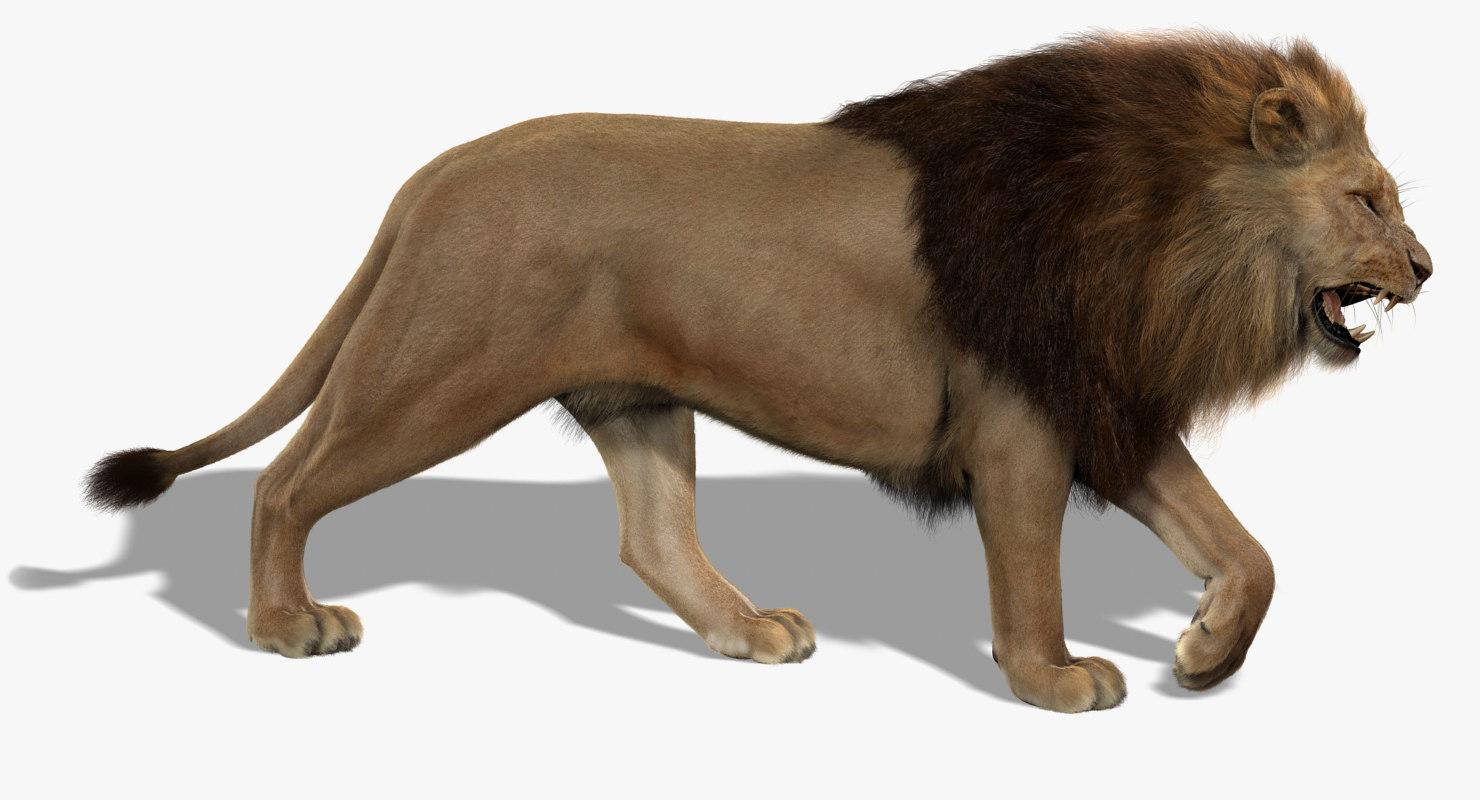 Lion (3) (FUR)