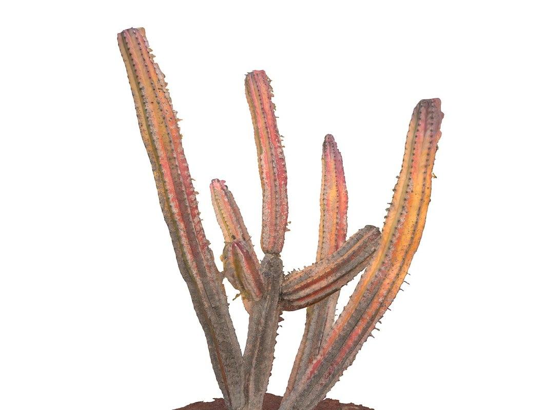 Real  Cactus  8K