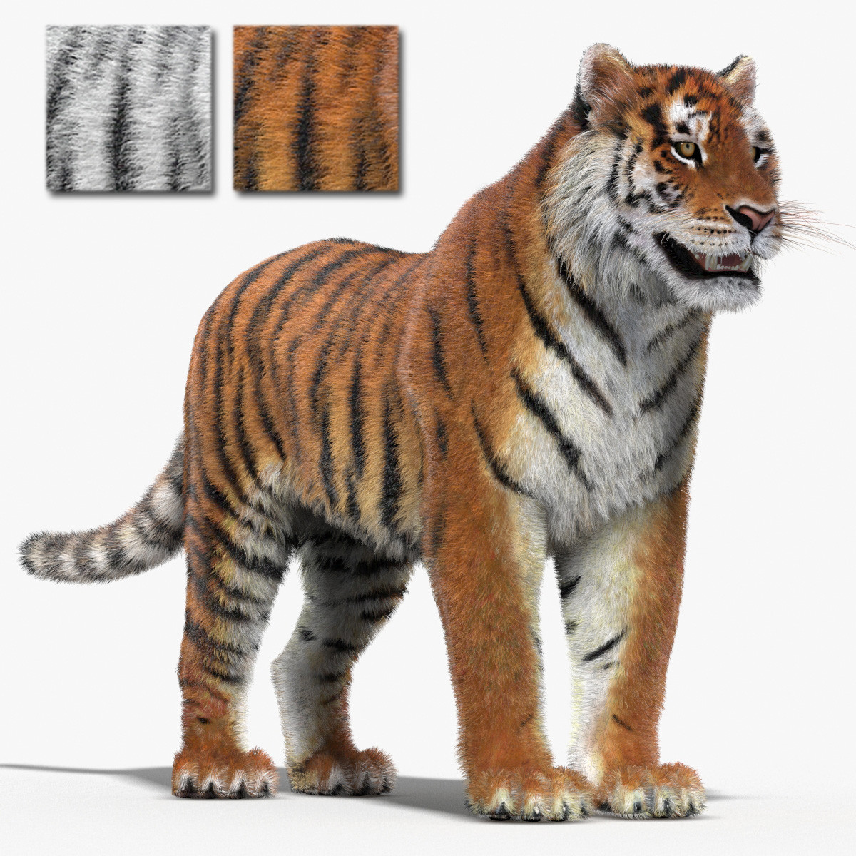 Tiger-Fur-3d-Model-00.jpg