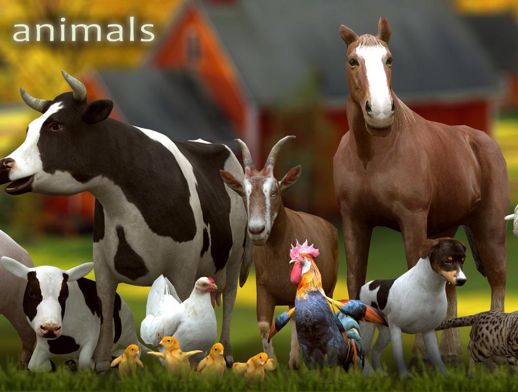 3DRT - 12 Domestic Animals