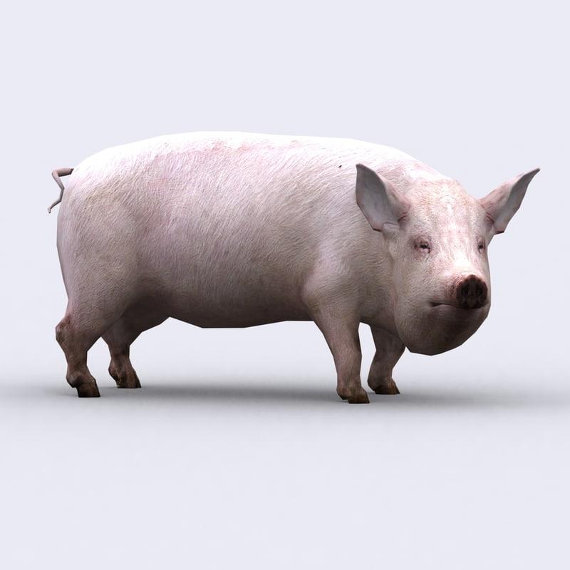 3DRT - Pig