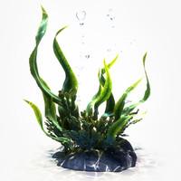 Seaweed 3D models