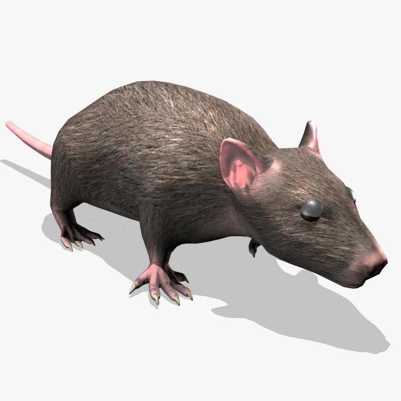 Rat_Signature.jpg