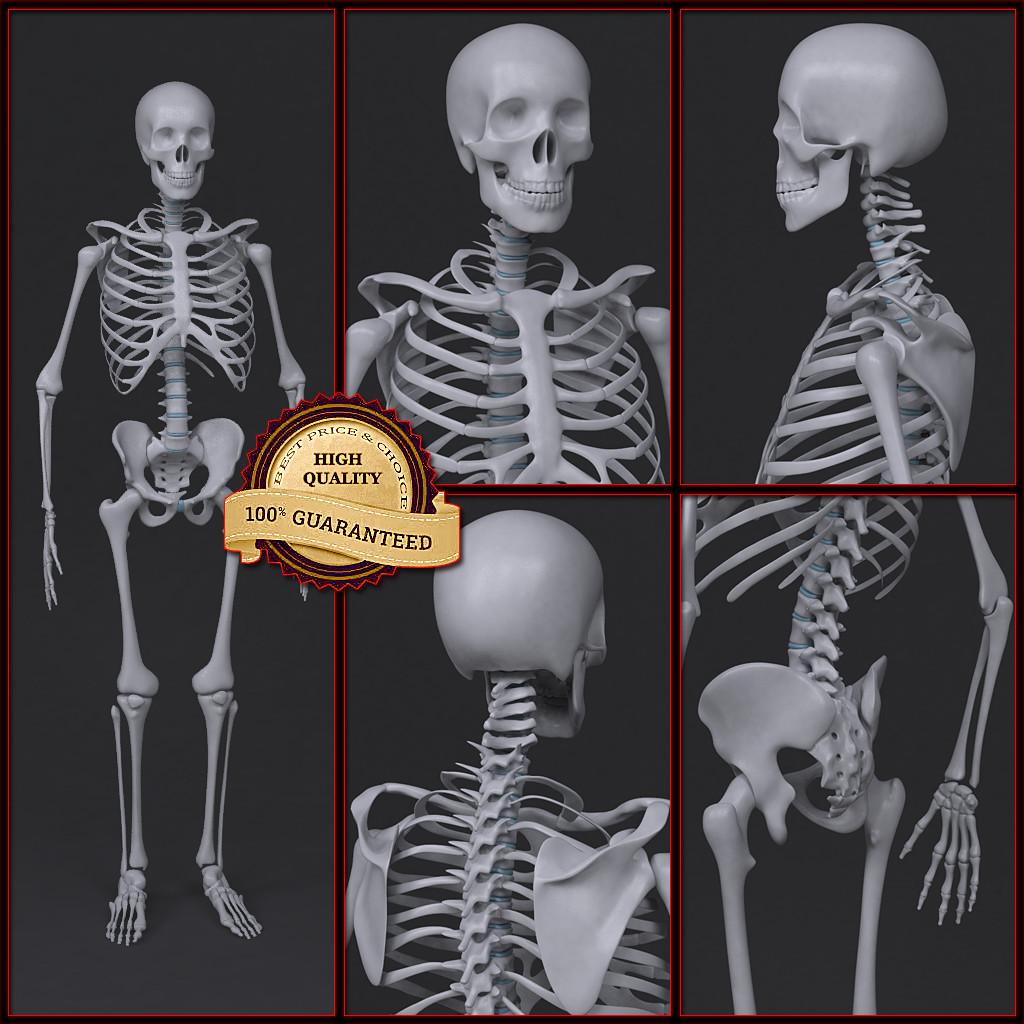 Skeleton_col_v01.png
