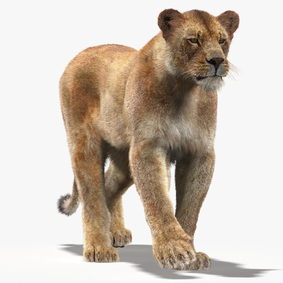 Lioness-Mental-Ray-00.jpg