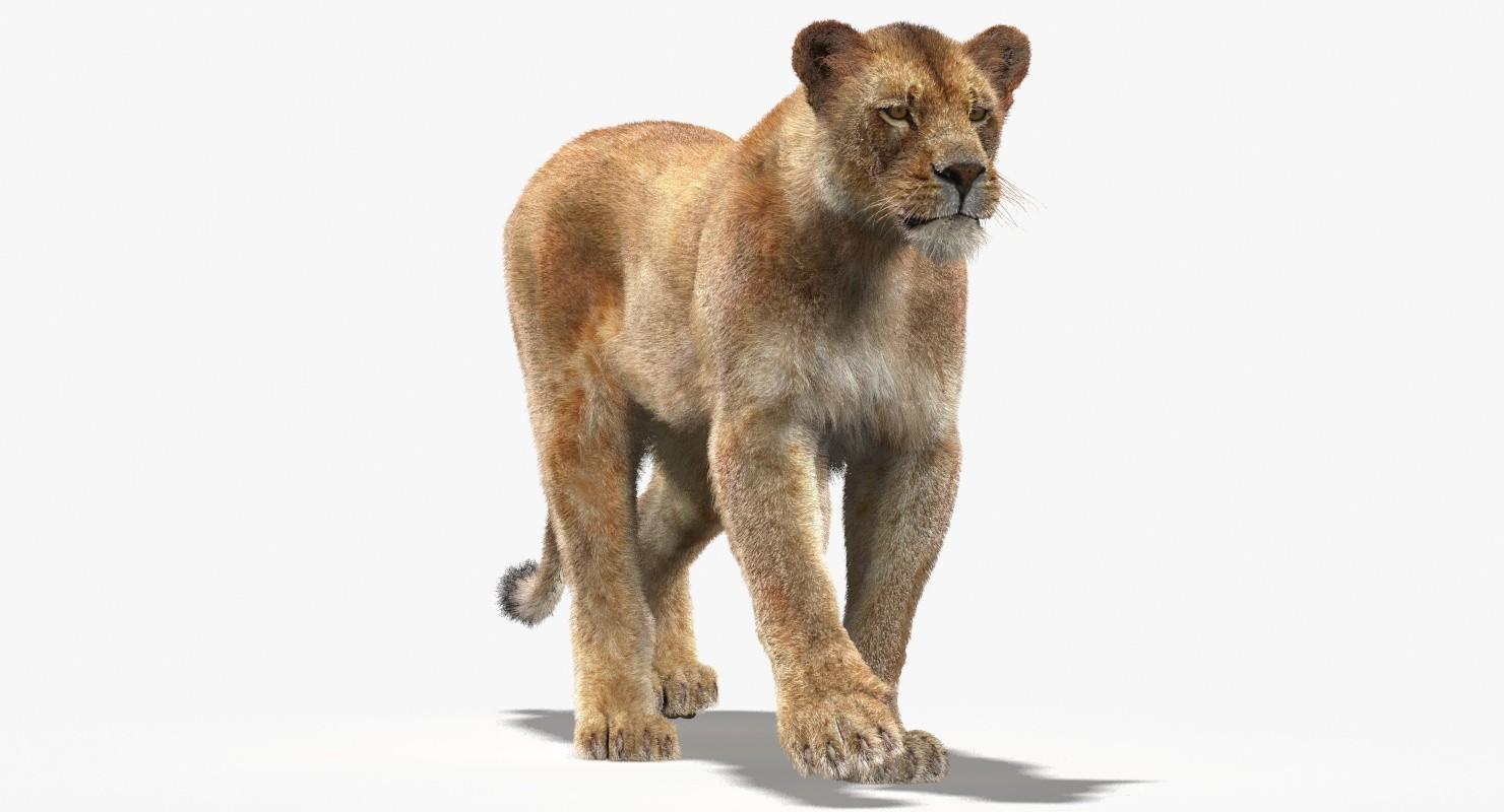 Lioness-Mental-Ray-01.jpg