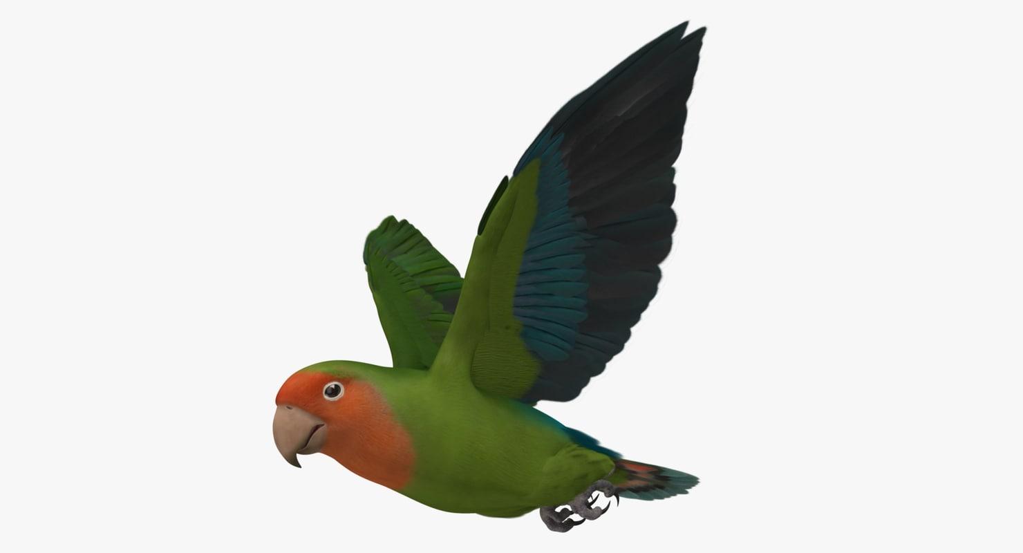"""Agapornis Roseicollis """"Peach Faced Wild Green Lovebird"""""""