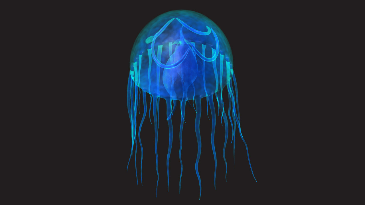 Jellyfish (or) Medusa_05.jpg