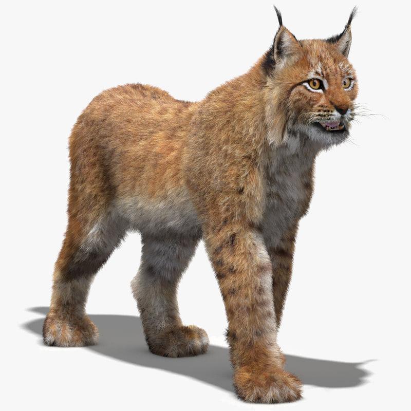 Eurasian Lynx-00.jpg
