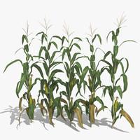 corn 3D models