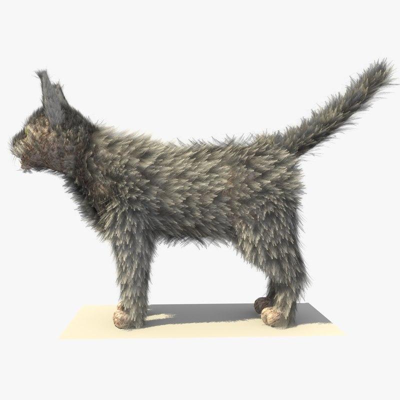 CAT GREY 1.jpg