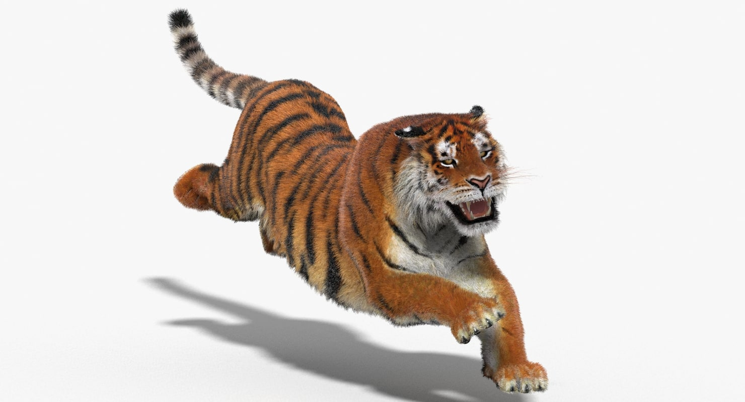 Tiger-3D-model-animated-fur-01.jpg