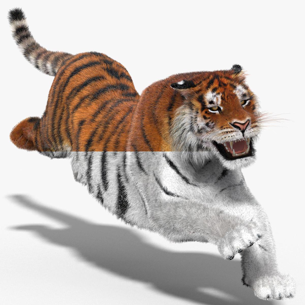 Tiger-3D-model-animated-fur-00.jpg