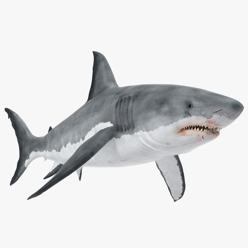 Great White Shark 3d model 01.jpg