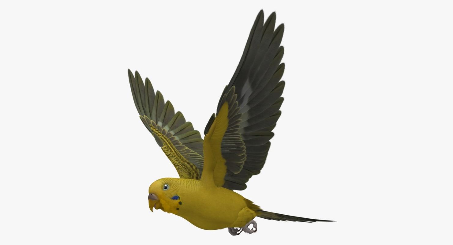 Melopsittacus Undulatus 'Budgerigar Yellow'