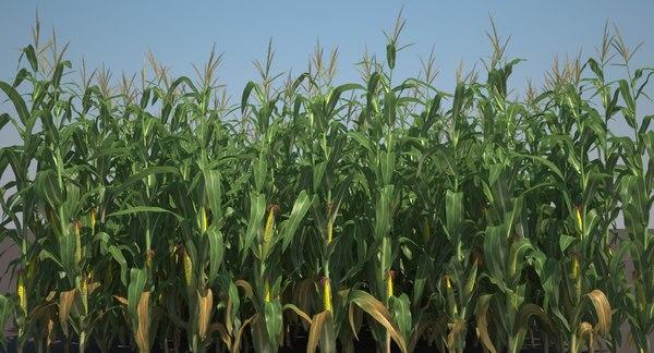 Corn Field 3D Models