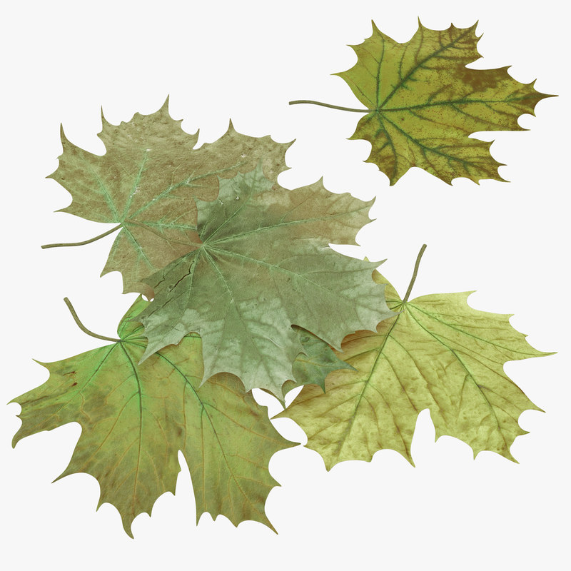 Green Maple Leaves 3d models 01.jpg