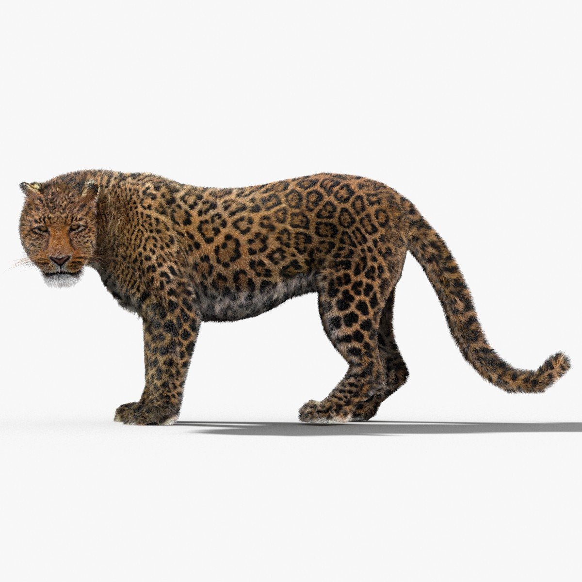 Leopard-3D-model-animated-fur-00.jpg