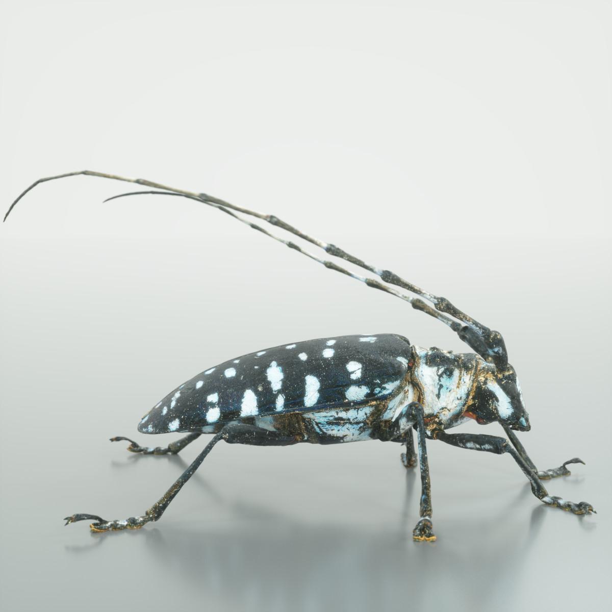 Calloplophora_Sollii_3D_Insect_Scan_Mark_Florquin_3D_Model_Render-3.png