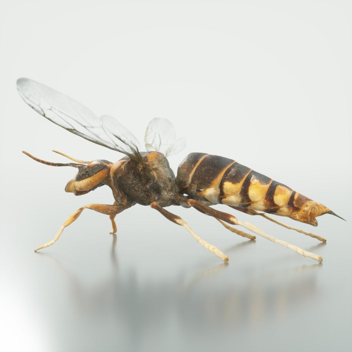 Vespa_Velutina_Variana_Wasp_3D-Model_Scan_Mark_Florquin_3D_Model_Render-5.png