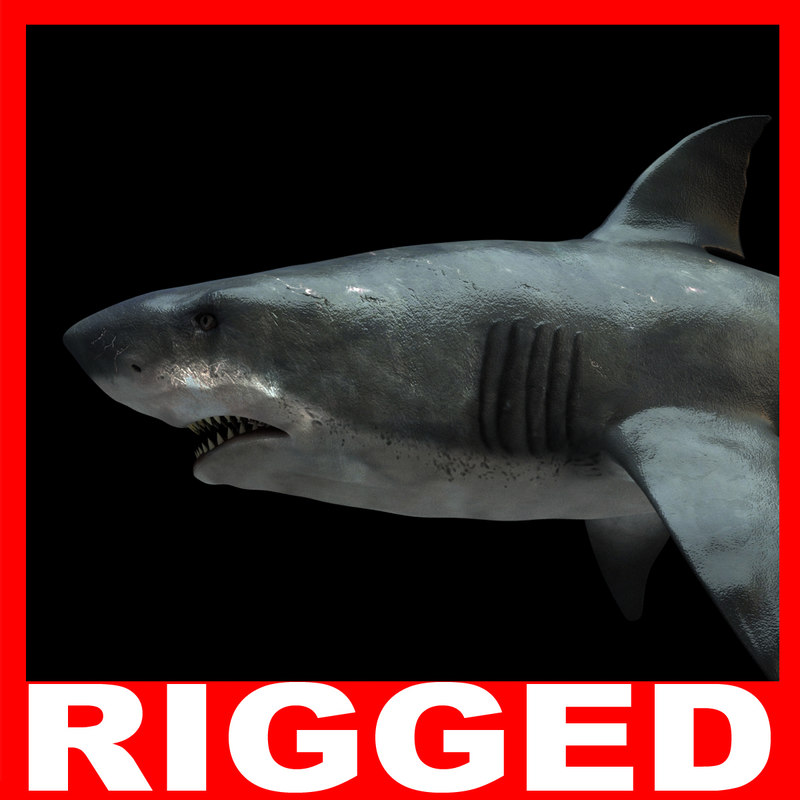 Shark (Rigged)