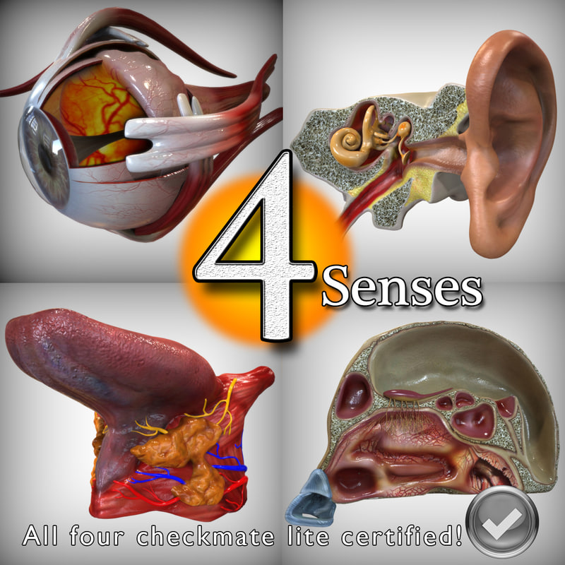 Four_Senses.jpg