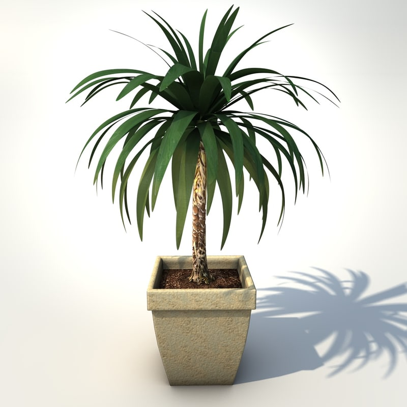 Yucca_elephantipes_in_pot_3d_model_by_Andreas_Piel_01_0014.jpg