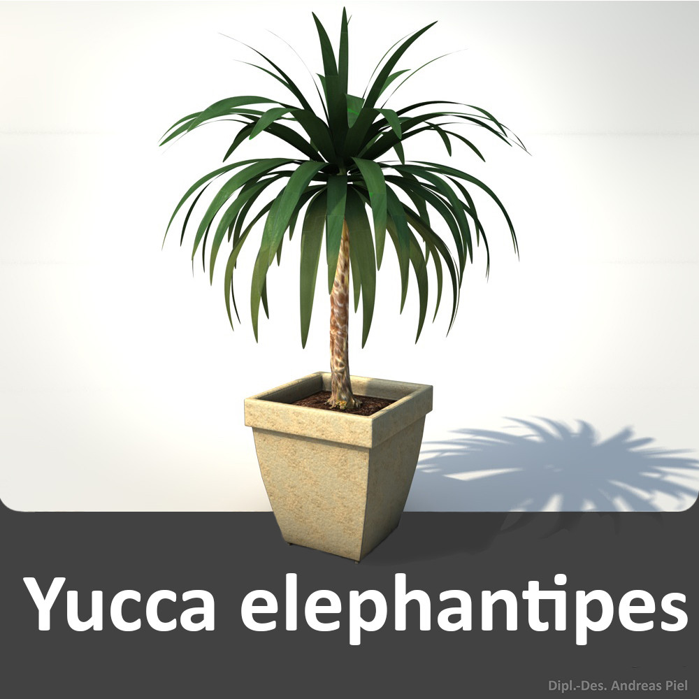 Yucca_elephantipes_plant_3D_model_by_Andreas_Piel.jpg