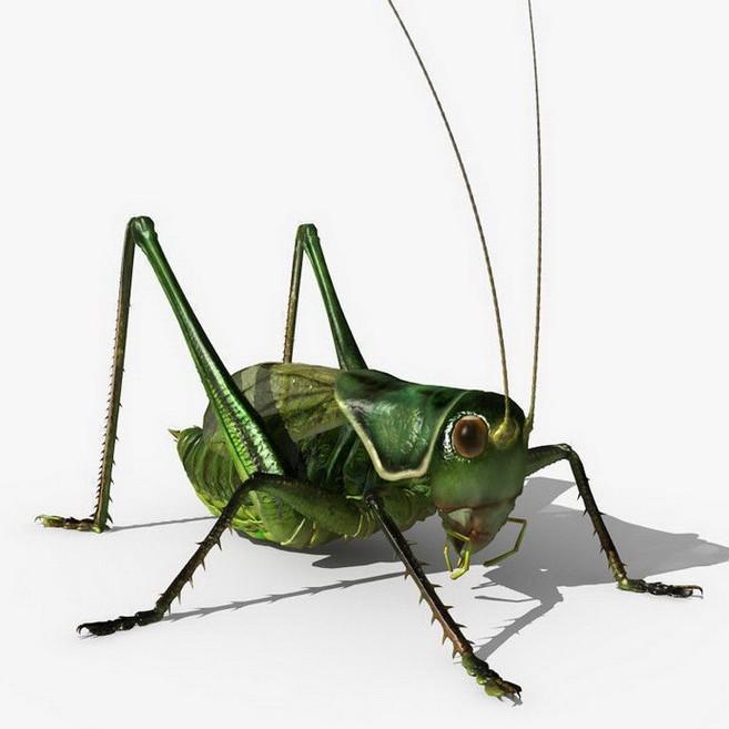 grasshopper?? 1.jpg