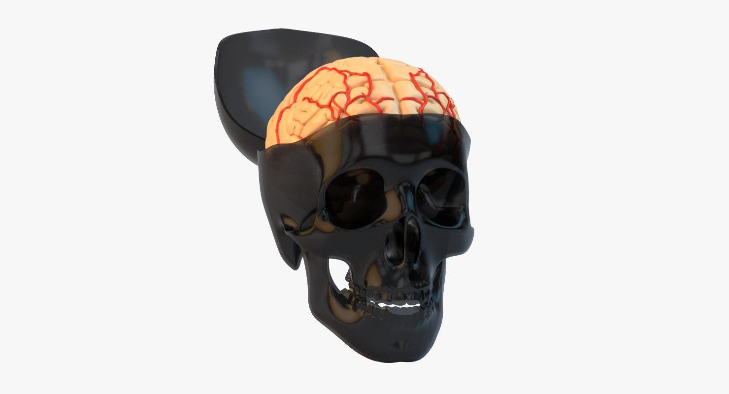 Skull_brain_col_v01.png