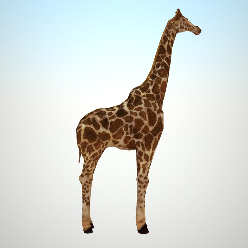giraffe_01.jpg