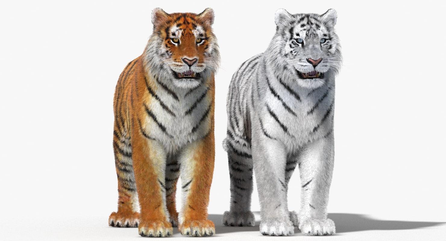 Tiger-Fur-3d-Model-01.jpg
