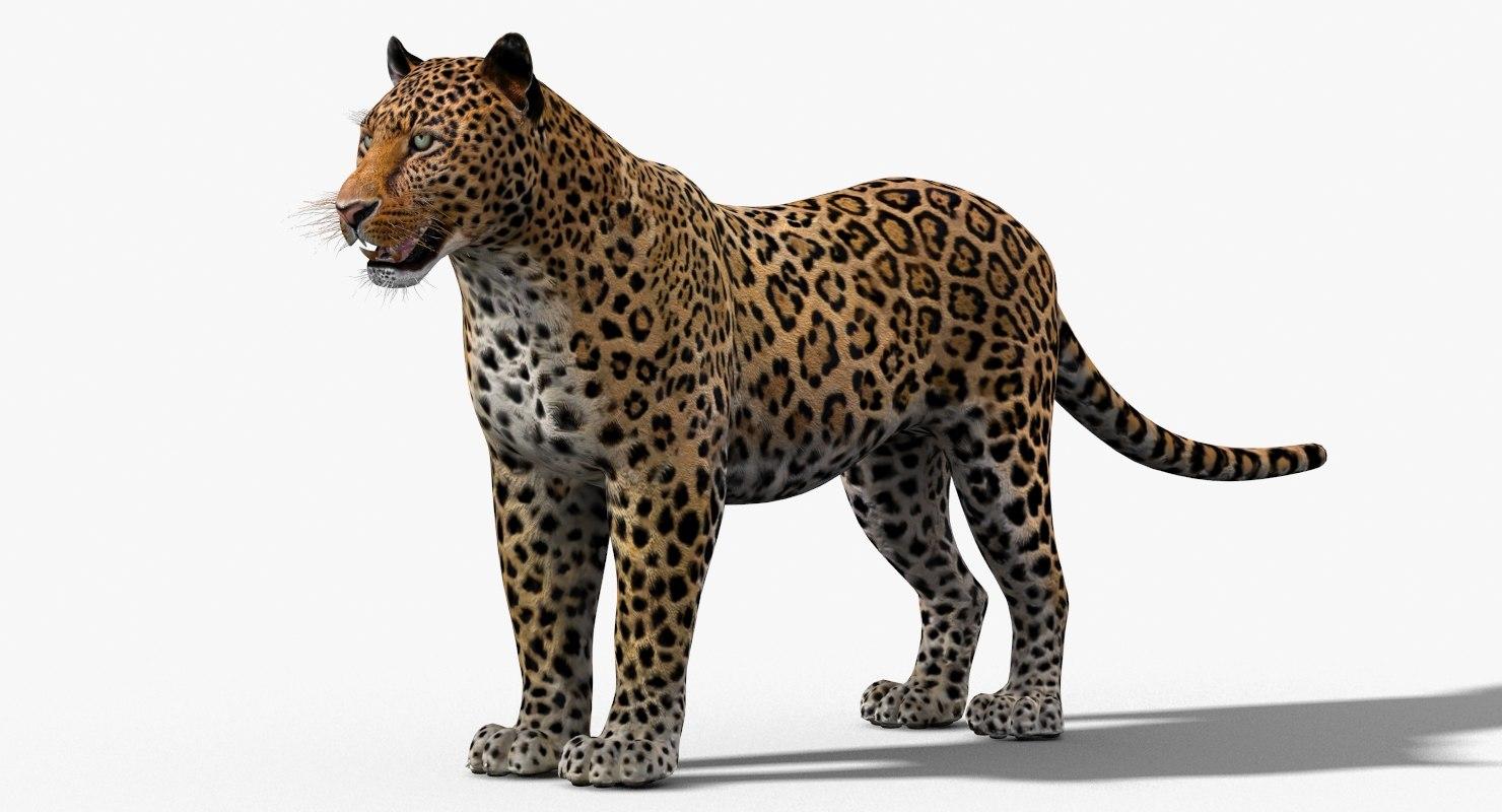 Leopard-3D-model-rigged-fur-01.jpg