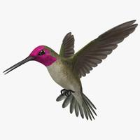 hummingbird 3D models