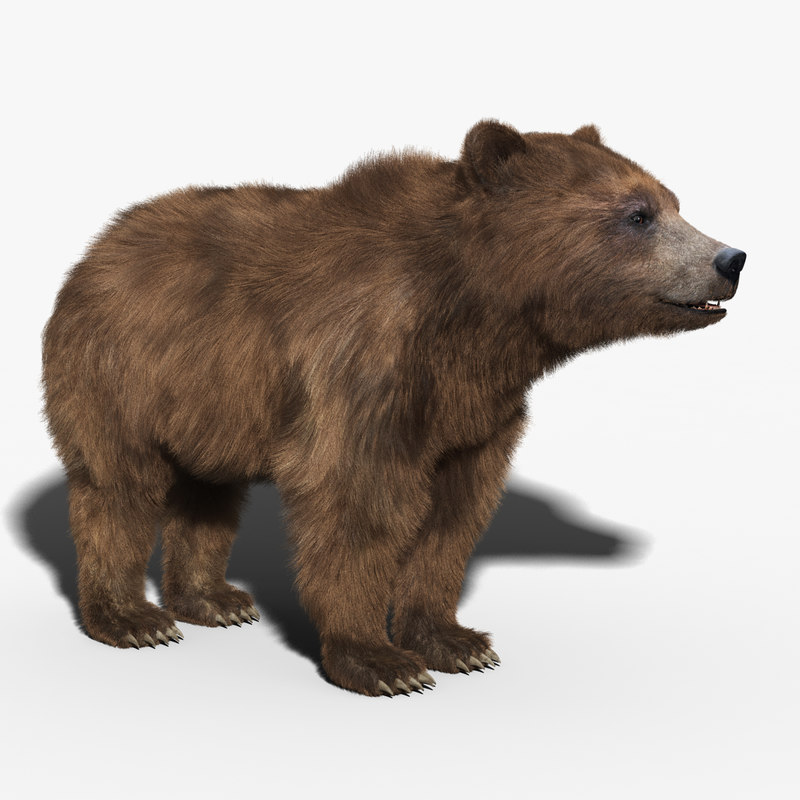 Brown Bear(FUR)